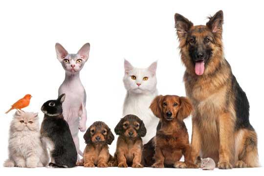 Famille accueil animal de compagnie Nantes