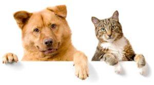 Garde chiens et chats Vacances Toussaint et Noël 2019: Ne tardez pas