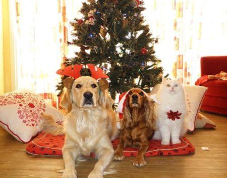 Réservations de Noël 2020 gardes, visites, chien, chat…